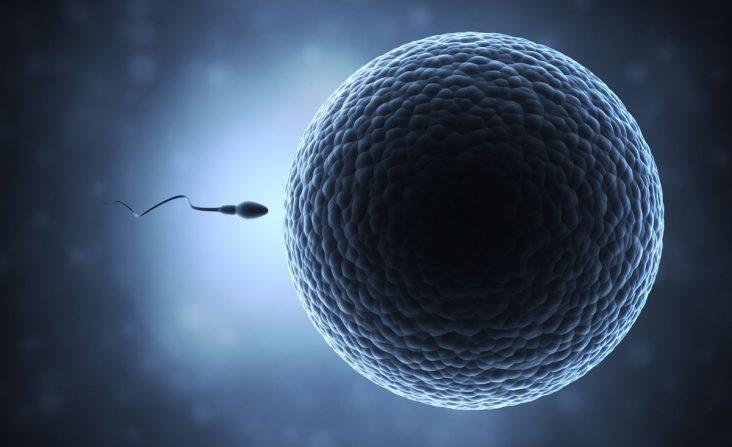 sperm_egg